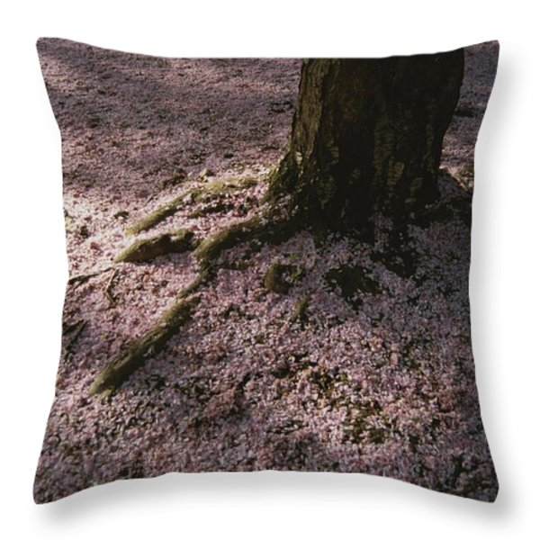 Soft Light On A Pink Carpet Of Fallen Throw Pillow by Stephen St. John