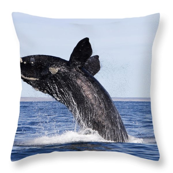Southern Right Whale Throw Pillow by Francois Gohier and Photo Researchers