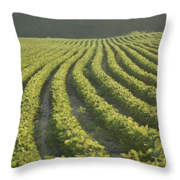 Soybean Crop Ready To Harvest Throw Pillow by Brian Gordon Green