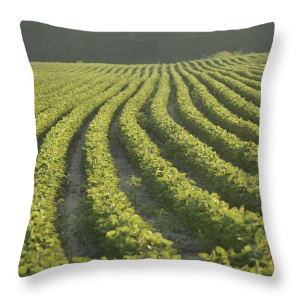 Soybean Crop Ready To Harvest Throw Pillow by Brian Gordon Green