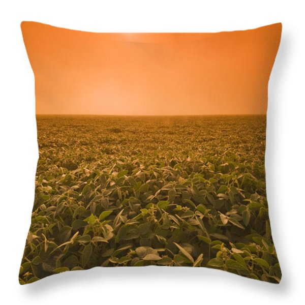 Soybean Field On A Misty Morning Throw Pillow by Dave Reede