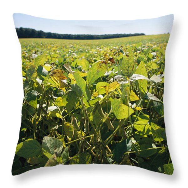 Soybeans Sprout In A Large Eastern Throw Pillow by Stephen St. John