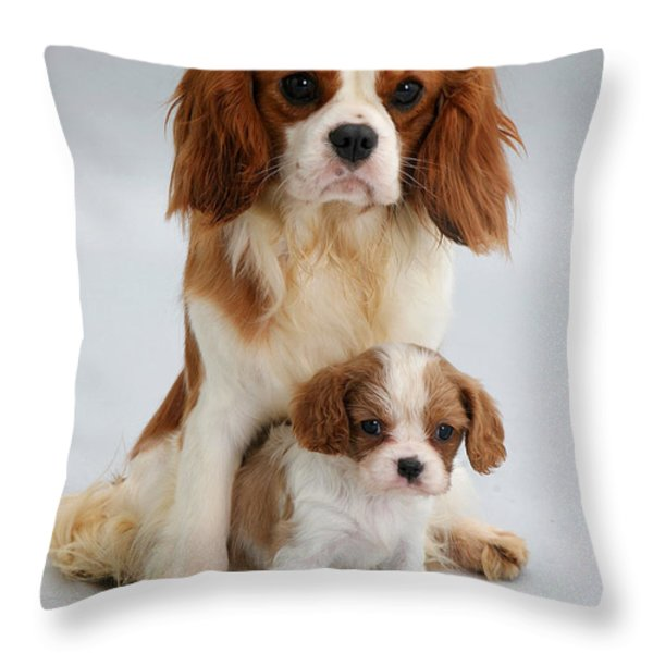 Spaniels Throw Pillow by Jane Burton
