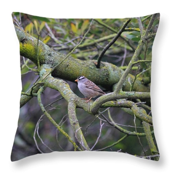 Sparrow Bird Perched . 40D12307 Throw Pillow by Wingsdomain Art and Photography