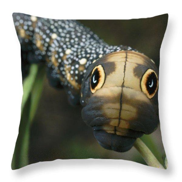 Sphinx Moth Caterpillar Inflating Throw Pillow by Darlyne A. Murawski