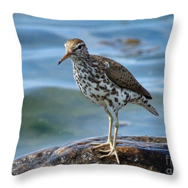 Spotted Sand Piper 6 Throw Pillow by Andrea Kollo