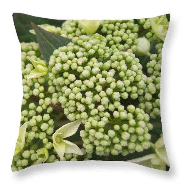 Spring Blooms 2 Throw Pillow by Anna Villarreal Garbis