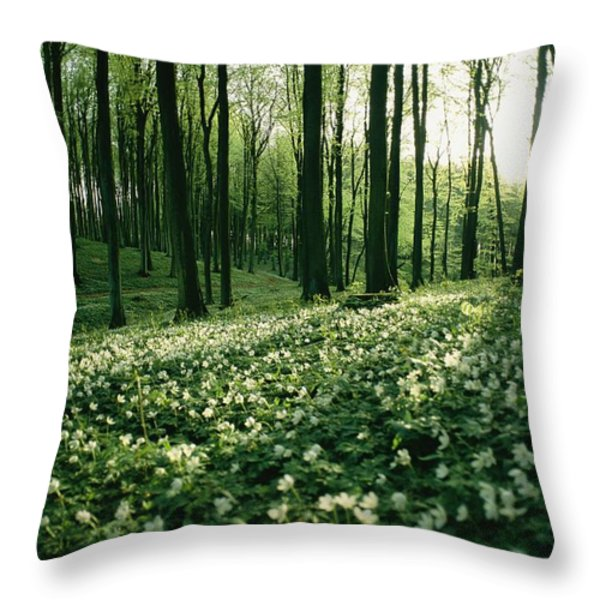 Spring Forest View With Anemones, Rugen Throw Pillow by Sisse Brimberg