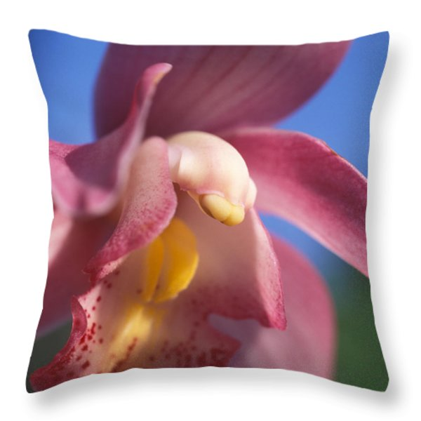Spring Orchid Throw Pillow by Kathy Yates