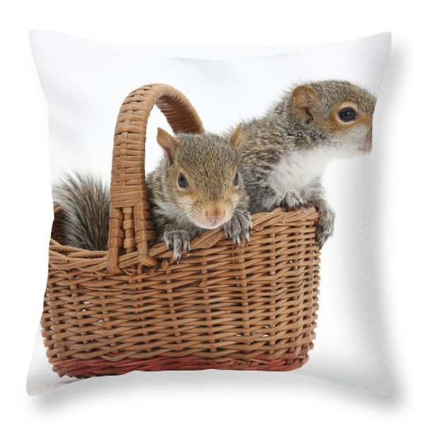 Squirrels In A Basket Throw Pillow by Mark Taylor