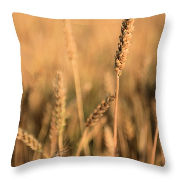 Standing Out in a Crowd Throw Pillow by JC Findley