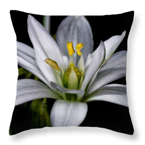 Star of Bethlehem Throw Pillow by Lori Coleman