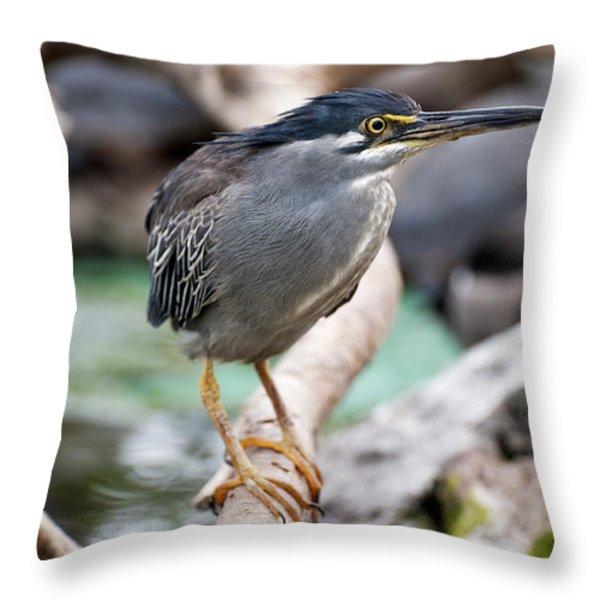 Striated Heron Throw Pillow by Fabrizio Troiani
