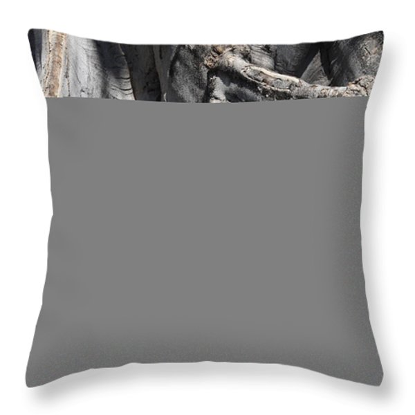 Strong Roots in Florida Throw Pillow by Carol Groenen