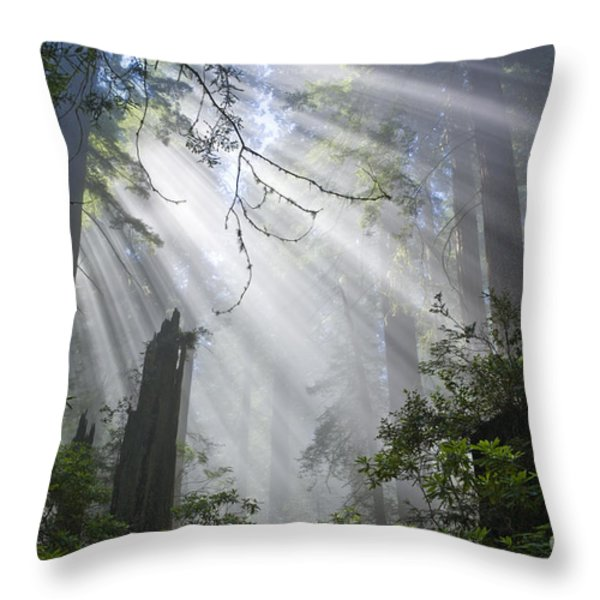 Sun Beams In Redwood Forest Throw Pillow by Inga Spence and Photo Researchers