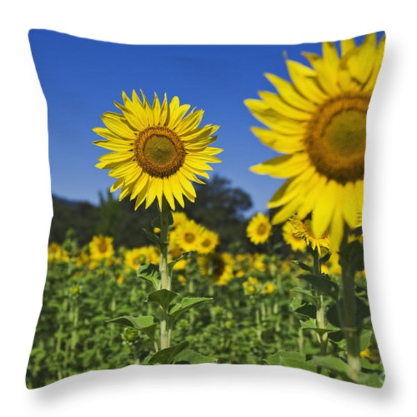 Sunflower Throw Pillow by Dennis Flaherty and Photo Researchers