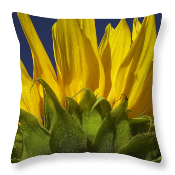 Sunflower Throw Pillow by Garry Gay