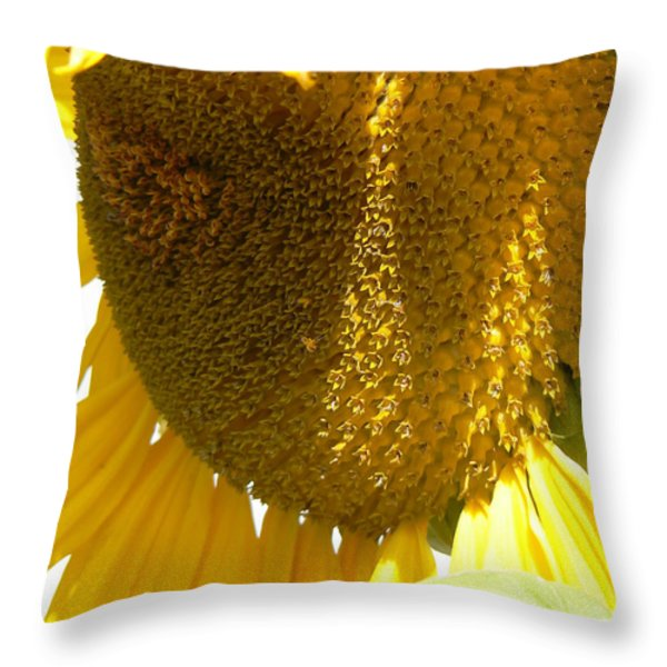 Sunflower Love  Throw Pillow by Pamela Patch