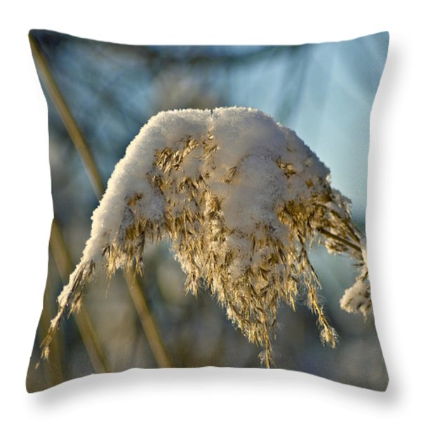 Sunny Day Snow Fall On The Bull Rushes Throw Pillow by LeeAnn McLaneGoetz McLaneGoetzStudioLLCcom