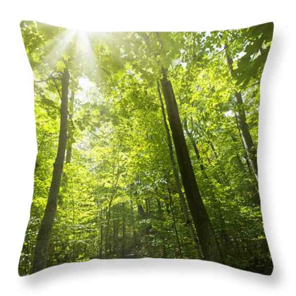 Sunny Forest Path Throw Pillow by Elena Elisseeva