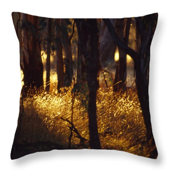Sunset Falls Over Seeding Grasses Throw Pillow by Jason Edwards