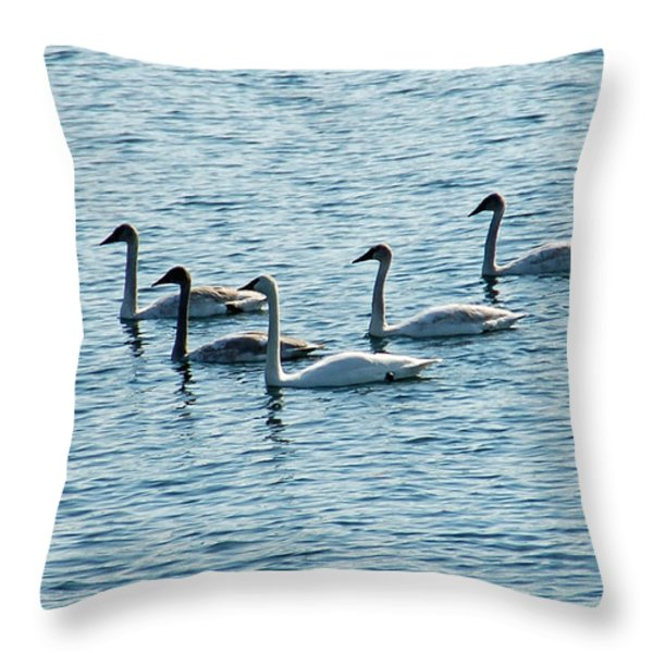 Swans Swimming Throw Pillow by Aimee L Maher Photography and Art Visit ALMGallerydotcom