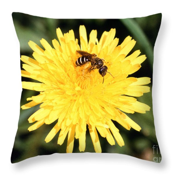 Sweat Bee Throw Pillow by Science Source