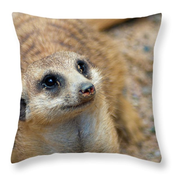 Sweet Meerkat Face Throw Pillow by Carolyn Marshall