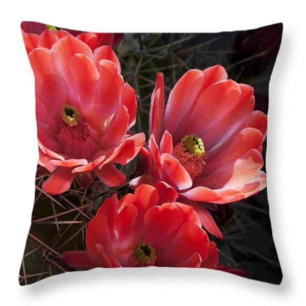Tangerine Cactus Flower Throw Pillow by Phyllis Denton