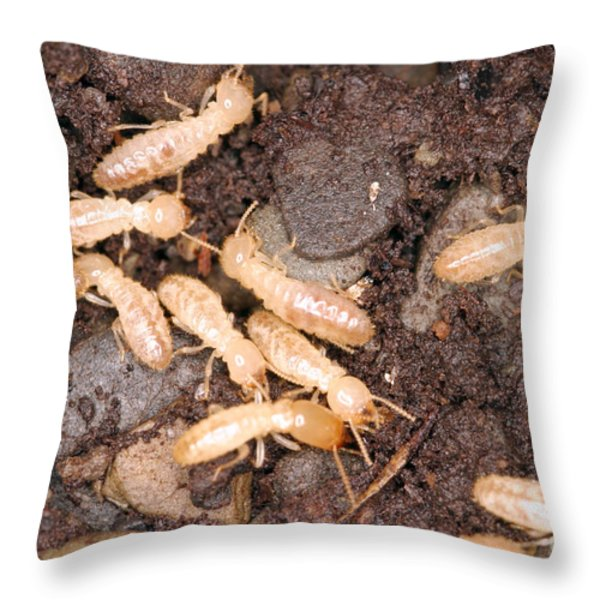Termite Nest Reticulitermes Flavipes Throw Pillow by Ted Kinsman