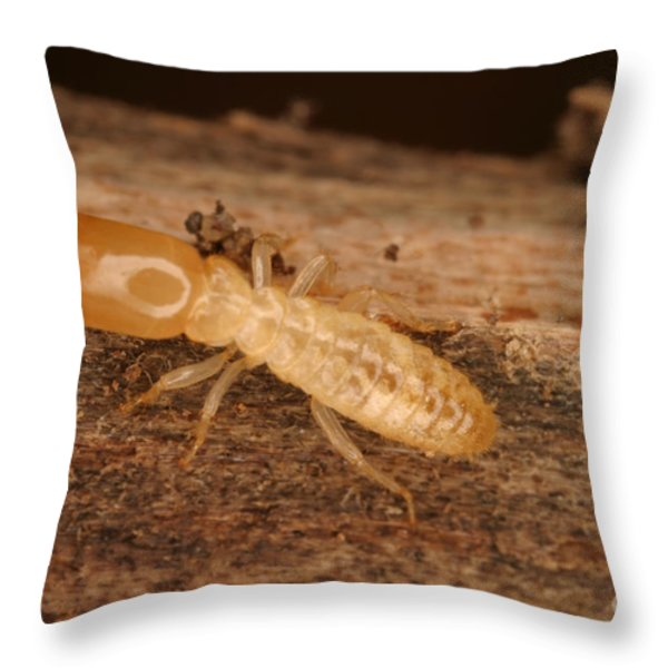 Termite Throw Pillow by Ted Kinsman