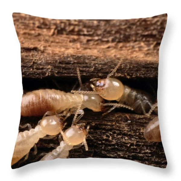 Termites Throw Pillow by George Grall
