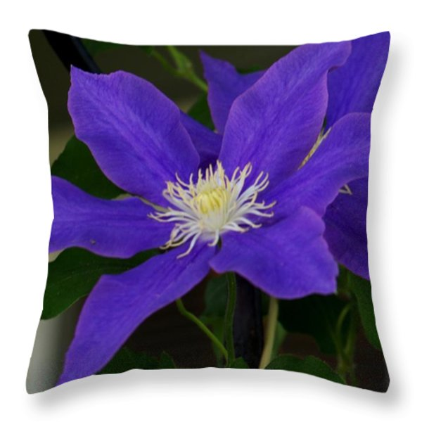 The Beauty Throw Pillow by Julie  Grace