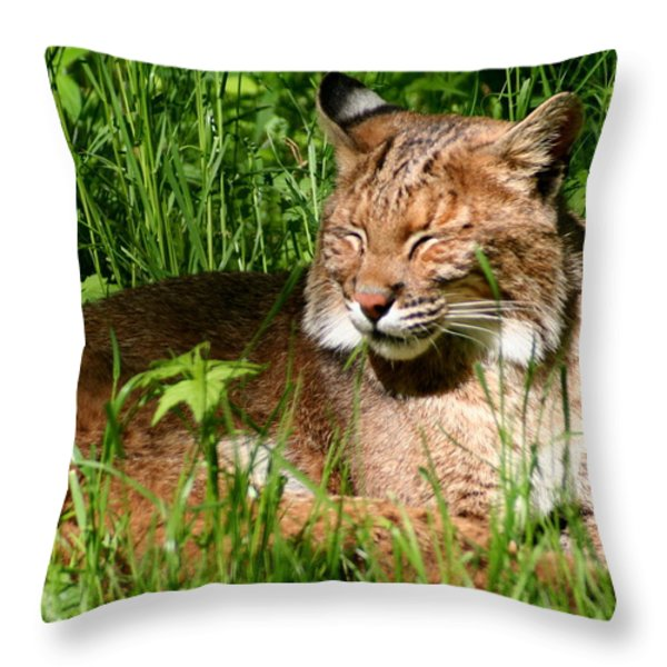 The Bobcat's Afternoon Nap Throw Pillow by Laurel Talabere