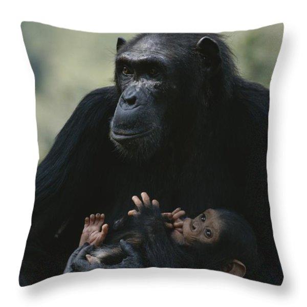 The Chimpanzee Rafiki With Her Twins Throw Pillow by Michael Nichols