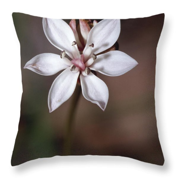The Delicate Pastel Pink Flower Throw Pillow by Jason Edwards
