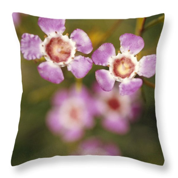 The Delicate Pink Petals Throw Pillow by Jason Edwards