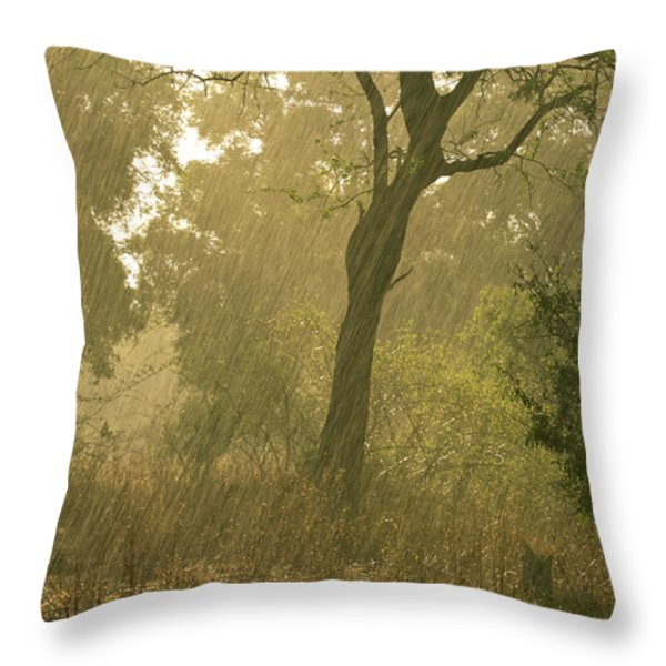 The First Downpour After Six Dry Months Throw Pillow by Frans Lanting
