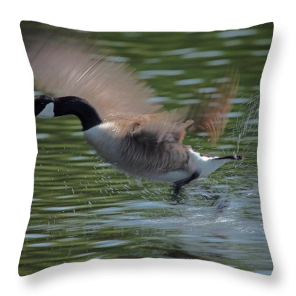 The Flight Throw Pillow by Karol Livote