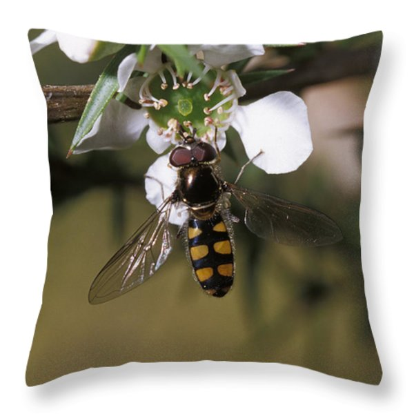 The Jewel Like Eyes, Transparent Wing Throw Pillow by Jason Edwards