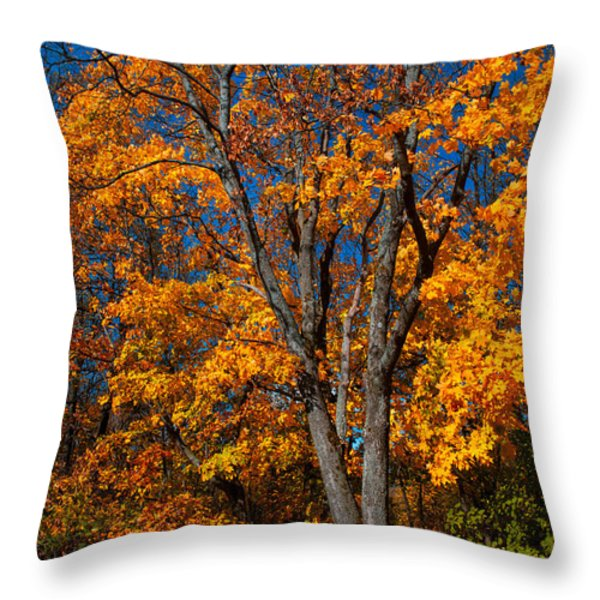 The Moment Of Glory Throw Pillow by Jenny Rainbow
