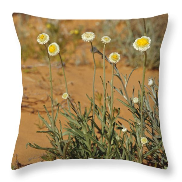 The Poached Egg Daisy Emerges From Red Throw Pillow by Jason Edwards