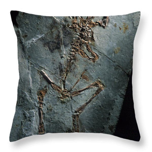 This 124 Million Year Old Frog Fossil Throw Pillow by O. Louis Mazzatenta