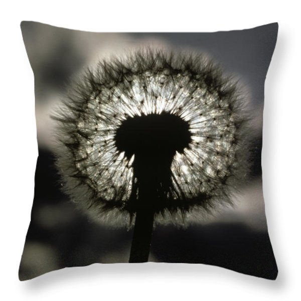 Thoreau Called A Dandelion A Complete Throw Pillow by Farrell Grehan