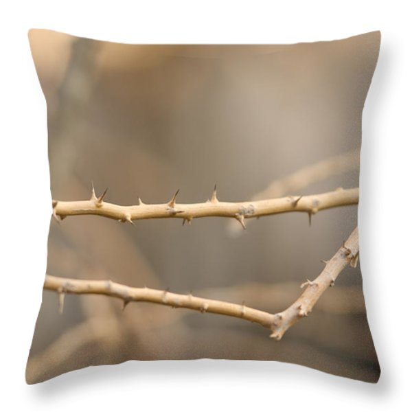 Thorny Desert Plant Inside The Desert Throw Pillow by Joel Sartore