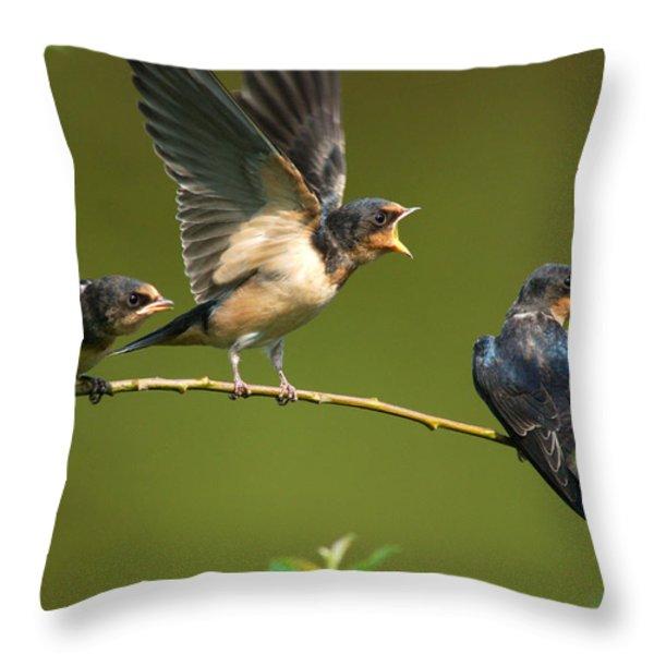 Three Barn Swallow Fledglings Begging Throw Pillow by Darlyne A. Murawski