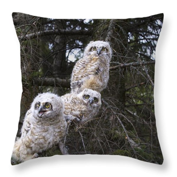 Three Great Horned Owl Bubo Virginianus Throw Pillow by Richard Wear