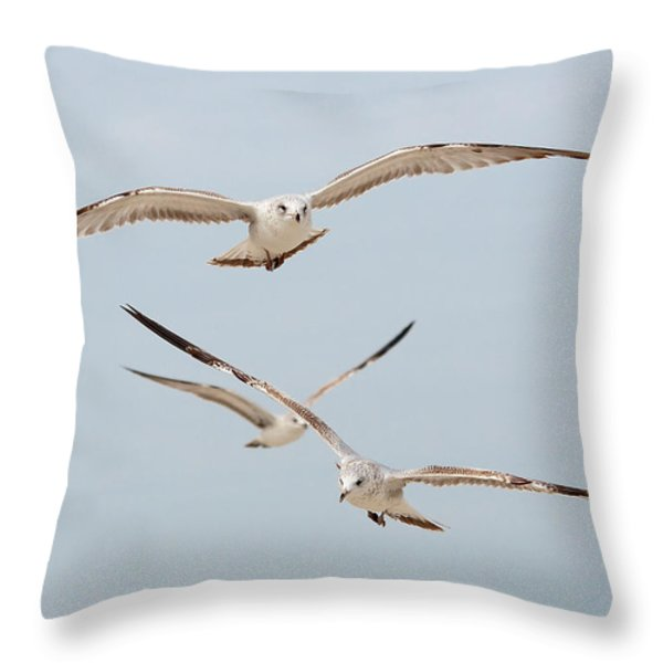 Three Gulls Throw Pillow by Kenneth Albin