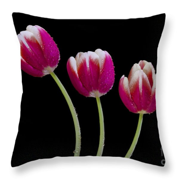 Three Of A Kind Throw Pillow by Susan Candelario