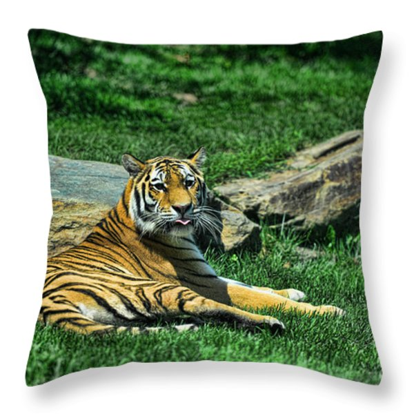 Tiger - Endangered - lying down - tongue out Throw Pillow by Paul Ward